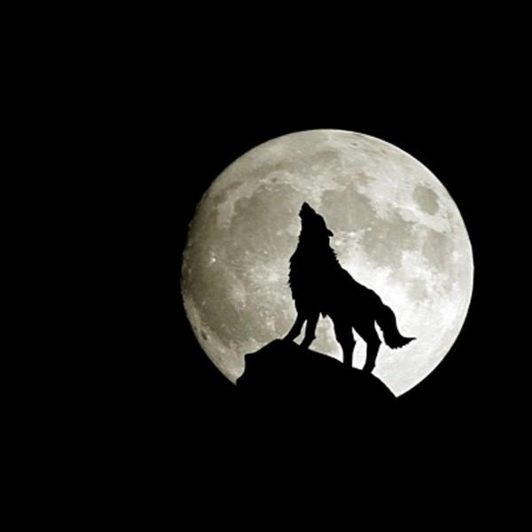 картинка воющего волка на луну