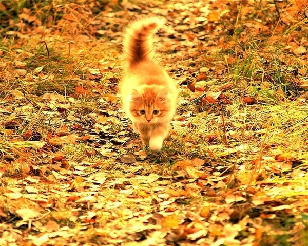 фото рыжий кот осенью