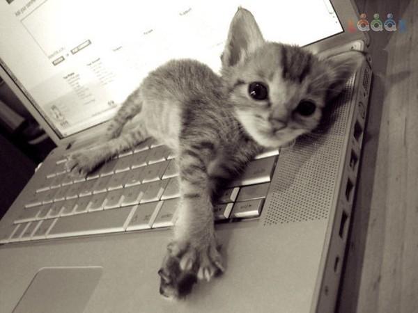 Можно ли оставлять кота одного дома на 2 дня