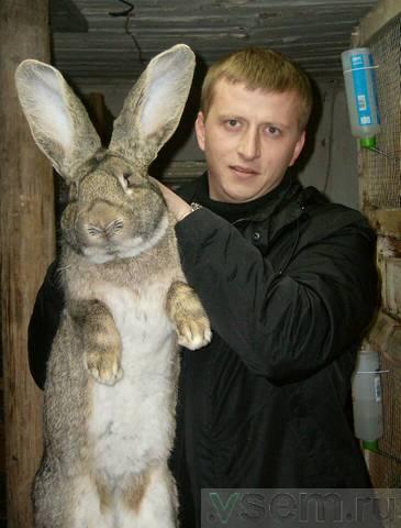 ребенок очень какая порода мясных кроликов самая лучшая отзывы термобелье