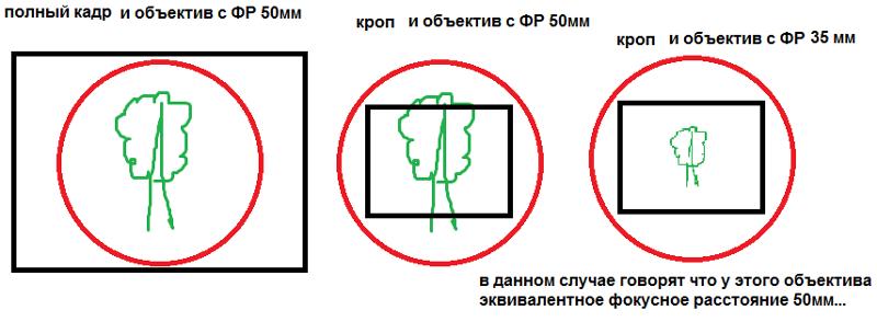 что значит кропнутый фотоаппарат надрезается области шеи