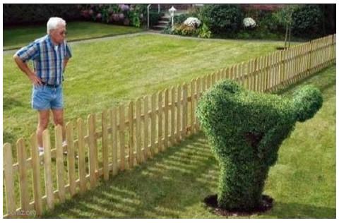 подсматривают на соседку через забор