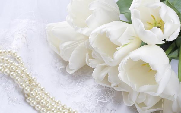 Цветы фото белые нежные