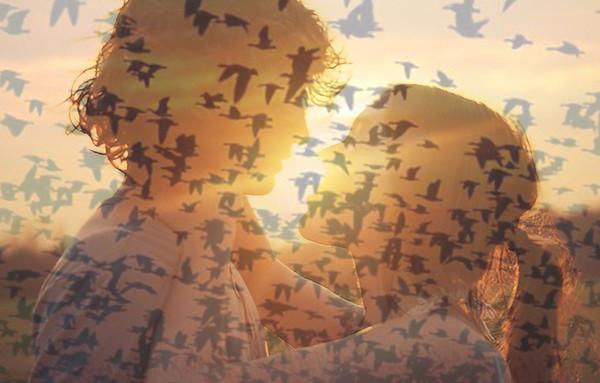 Сонник окно стая птиц бились