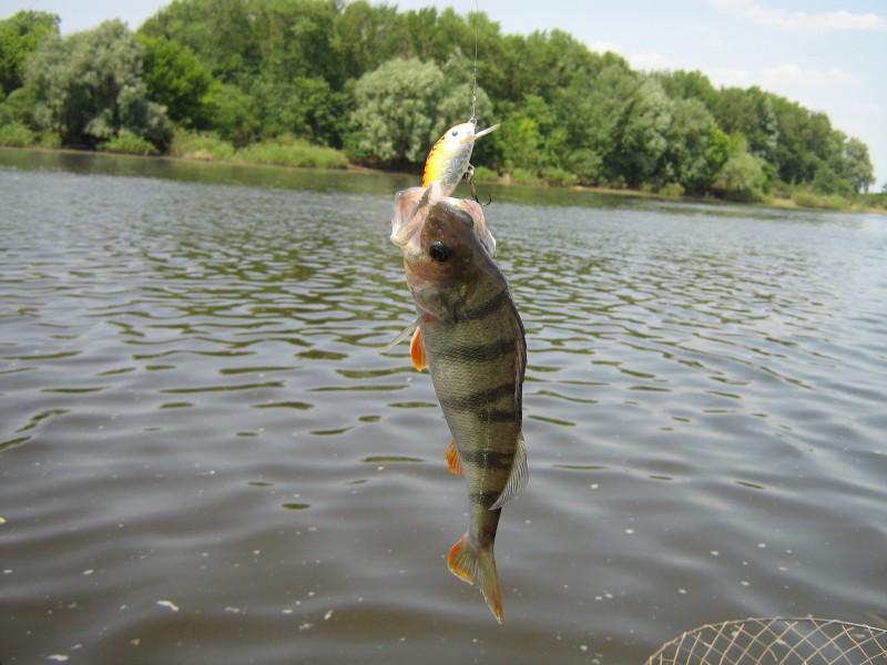 Рыба клевала хорошо в речке