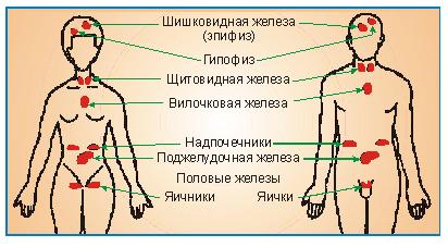 картинки 8 класс биология