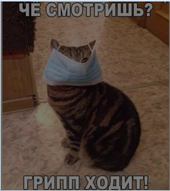 Как объяснить коту что ему нельзя