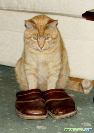 Ответы на кот в сапогах