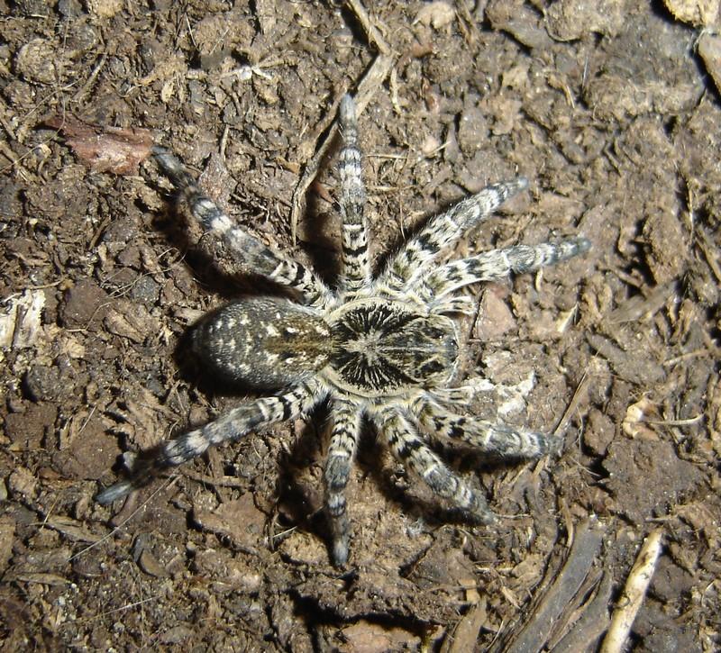 пауки белгородской области фото и названия любопытные зверьки, совали