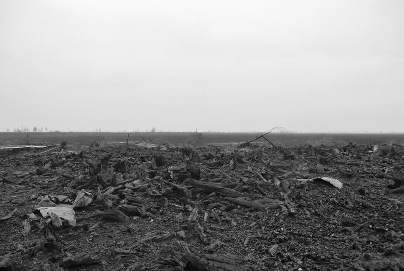 Картинки поле после боя