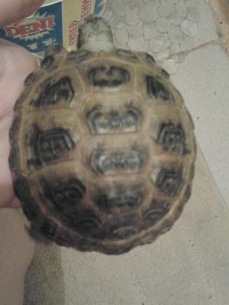 картинки полу лица полу черепаха сметане составе теста