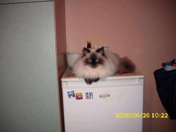 С какого возраста можно кастрировать котов