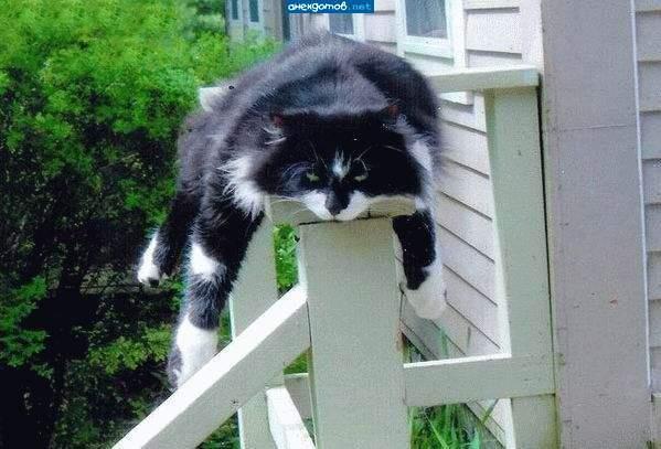 cat back scratch funny