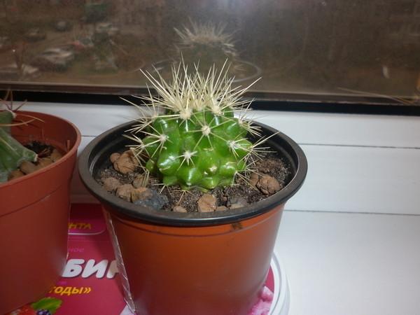 названия кактусов фото и названия