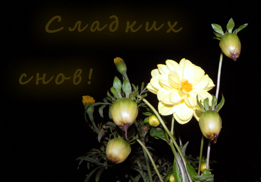 Картинки спокойной ночи и сладких снов с цветами, для мужчины друга