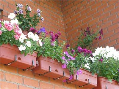 Ящики для цветов на балкон: как сделать своими руками + виде.