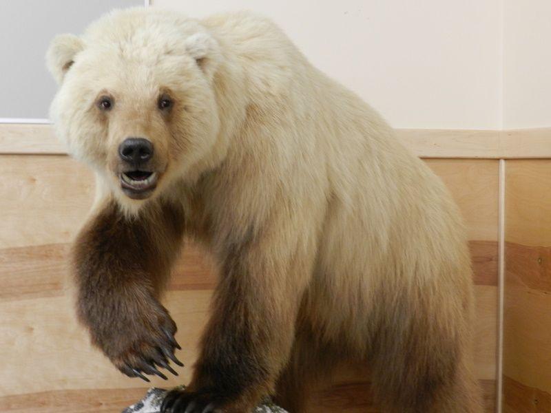 гибрид белого и бурого медведя фото сиреневый, фиолетовый