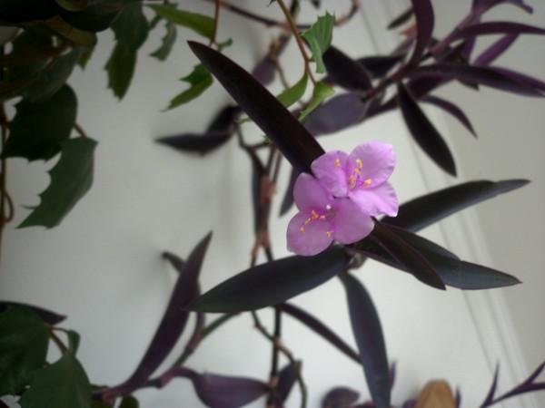 Цветок рос и пах