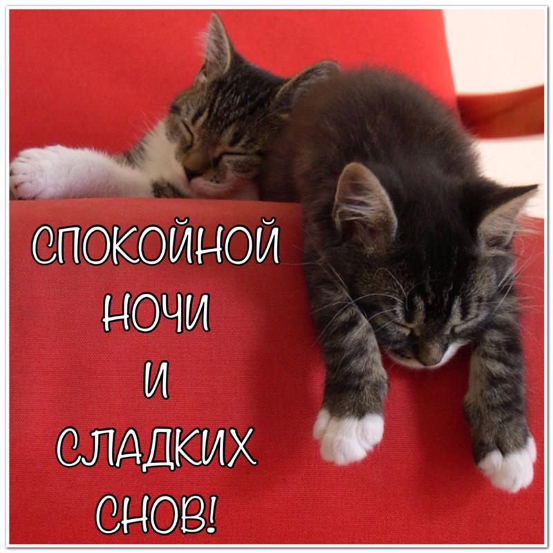 Спокойной ночи сладких снов картинки с надписями