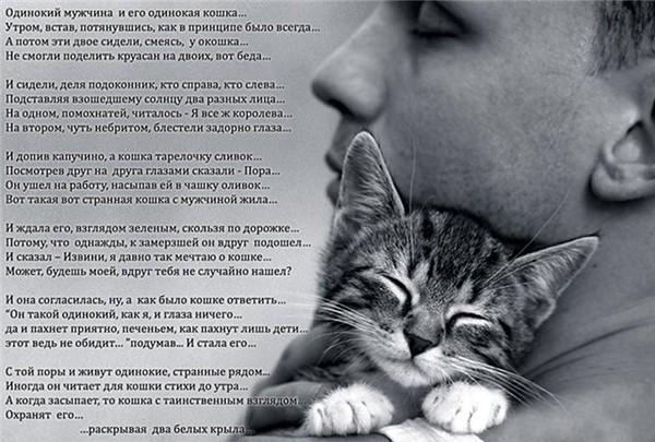 Стих мальчик и кот