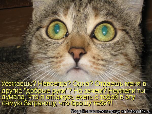Смешные коты со словами картинки, смешной