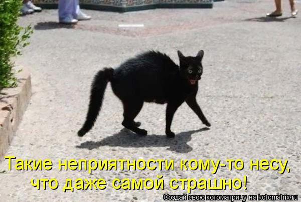 Если кот перебежал дорогу