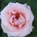 ели пересаживать розы во сне ответы майл аренде квартир