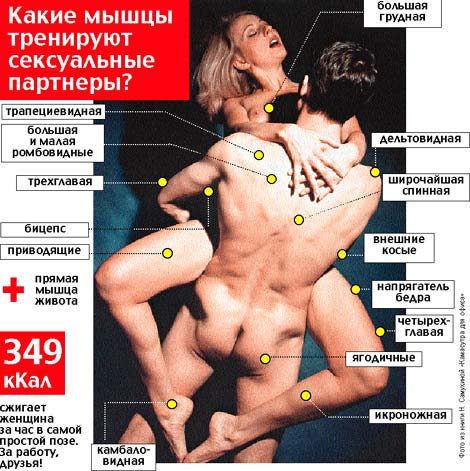 Интимные мышцы приводящие