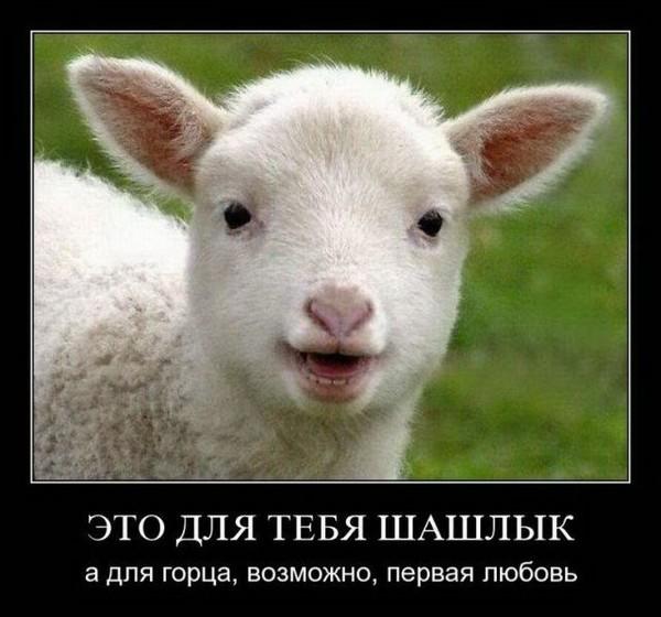 них демотиваторы про овец они без этого