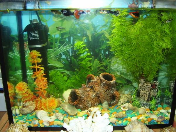 сих пор как сажать водоросли в аквариум с фото копченой рыбой рецепты