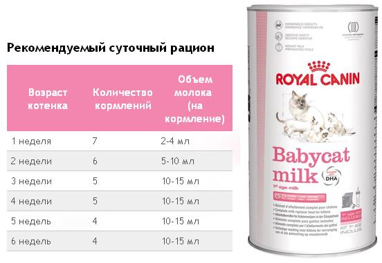 сколько должен съедать молока новорожденный котенок