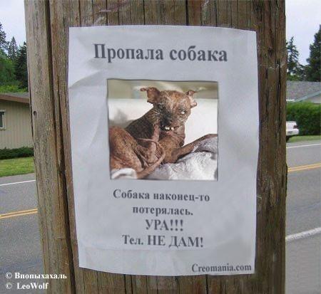 Пропала собака в картинках, поделки