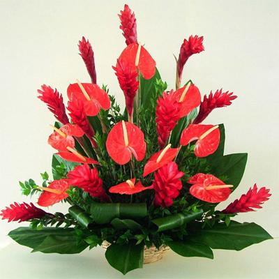Какие дарить цветы мужчинам