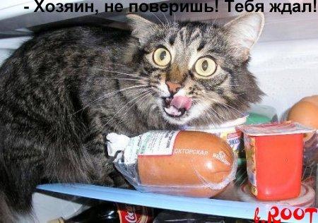 Если кот пропал в квартире