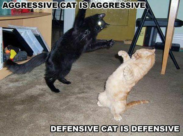 aggressive new cat behavior