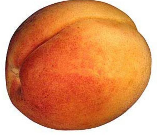 foto-vagina-persik