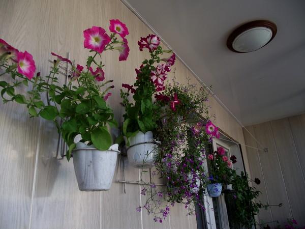 Ответы@mail.ru: а у вас на балконе ещё что-то цветёт?.