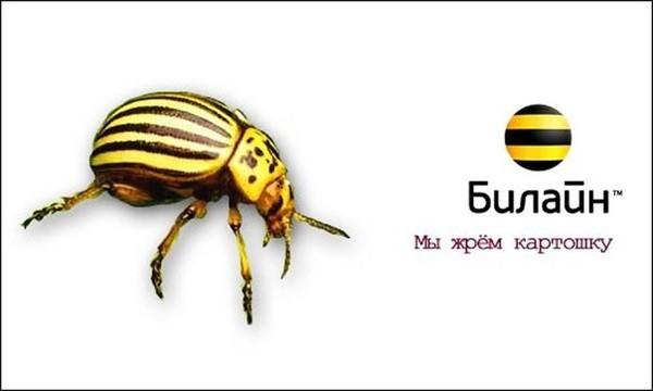 Колорадский жук картинки смешные, барби