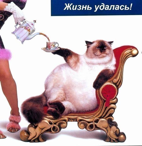 Что сделать что бы кот потолстел