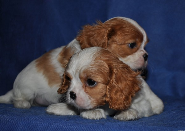 ветеринарное дело о гибели собаки от наркоза