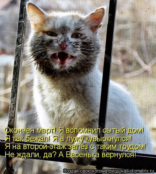 Коты гуляют весной