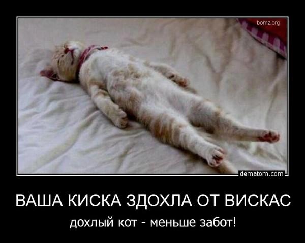 https://otvet.imgsmail.ru/download/a7d3aecd296b2110479f422592bf0d52_i-167.jpg