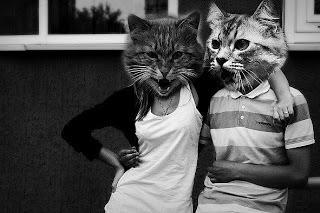 Вставить лицо кота