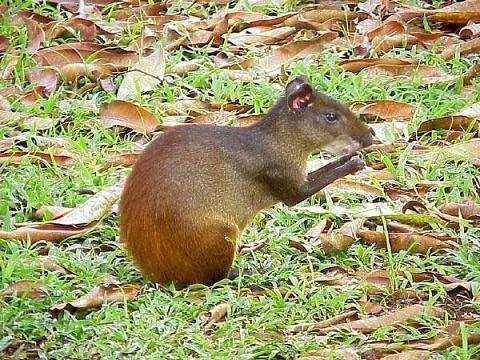 В ижевском зоопарке появился горбатый заяц - Rambler