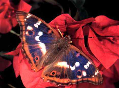 Image result for бабочки и мотыльки
