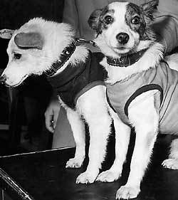 белка и стрелка фото собак