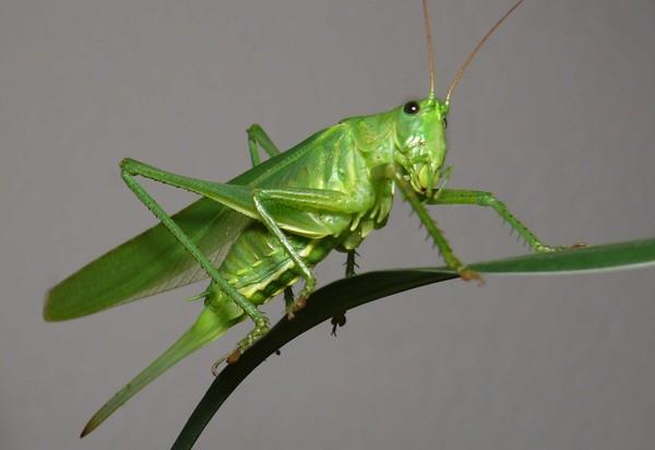 X-Static содержат как правильно прокаловать жуков и бабочек применяется при