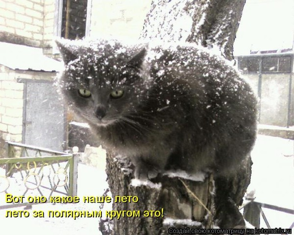 рассказал, что когда у нас лето где зима фото канапе