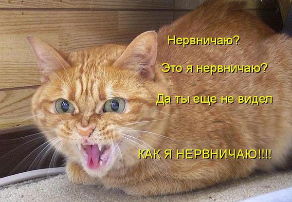 Почему кот спит целыми днями