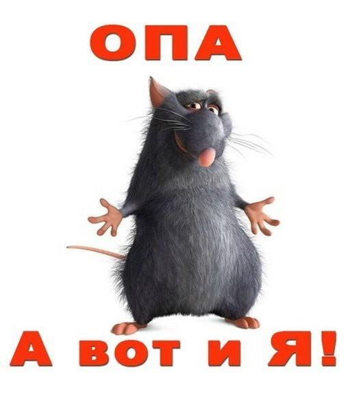Картинки, картинки с надписями про людей крыс